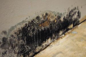 mold-on-wall